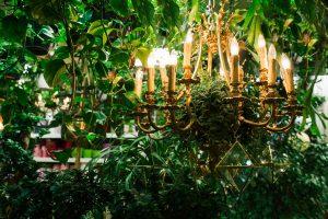 Plant 10