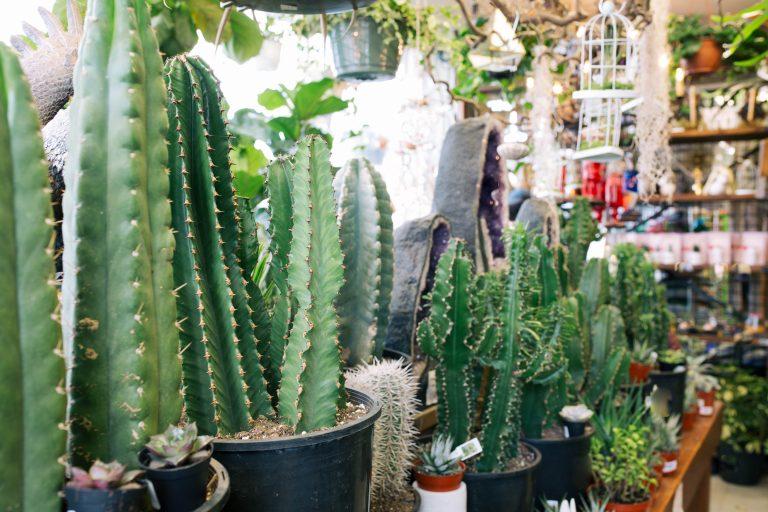 Plant 6